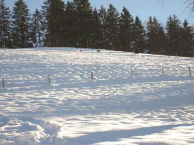 Rehe im Winter